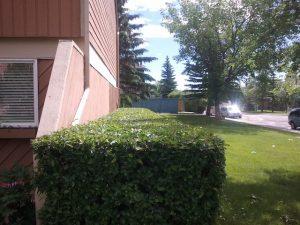 landscape pruning