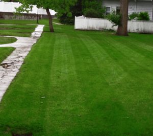 Sod for Condominium/Commercial | Signature Landscape Calgary